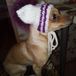 Hat pe un câine mini