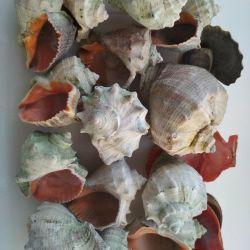 Akvaryum kabukları