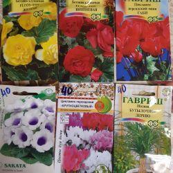 Seeds of indoor flowers in assortment