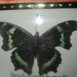 İçinde kelebekler