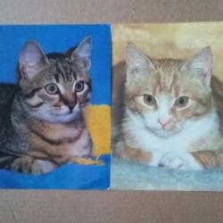 Postcards GDR 80s cats cats