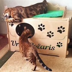 Maternity House for Cats