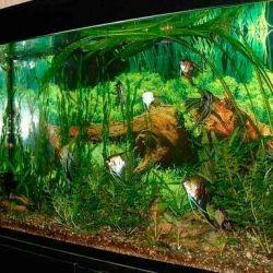Aquarium / terrarium from the TV.lyubogo.AKVA-TV !!!