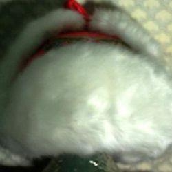 Women's hat - earflaps with rhinestones