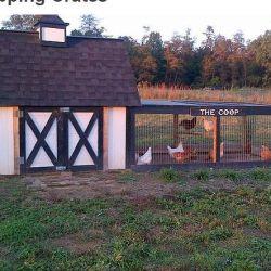Табір для пташок
