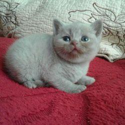 Персиковые котята и фавн.