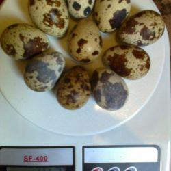 Αυγό ορτυκιού