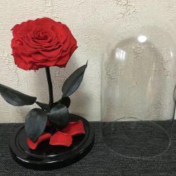 Rose in a flask