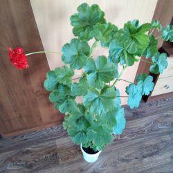 Flori pentru suflet și sănătate