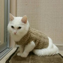 Kedi ya da köpek için kazak