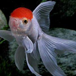 Orange Aquarium Brides !!!