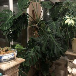 Inalte plante pentru birouri si vile