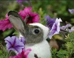 Çiçek ve hayvan bakımı