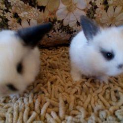 Карликовые крольчата