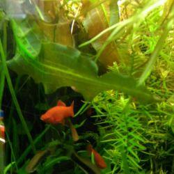 Start and maintenance of aquariums