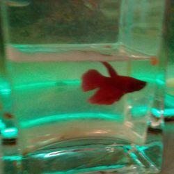 Самі Красиві Рибки