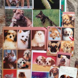 Dog Stickers Germany, China
