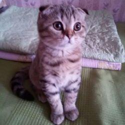 Scottish cutie