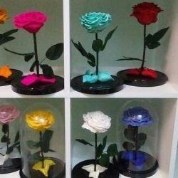 Τριαντάφυλλο σε επιπλέον φιάλη
