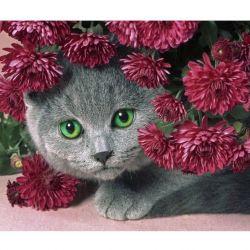 Διαμάντι μωσαϊκό γατάκι γατούλα