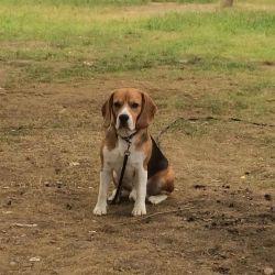 Beagle Πλεκτομηχανές