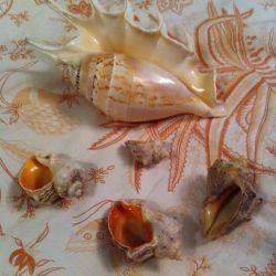Decor: Seashells. Feng Shui.