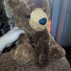 Brown bear brown