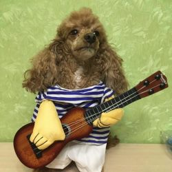 Dog costume with guitar