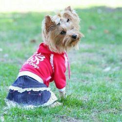Φόρεμα με φούστα denim (ρούχα για σκύλους)