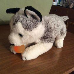 Волчонок из US