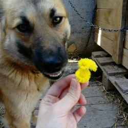 Собака улыбака Клепа