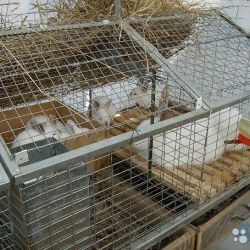 Κλουβί κουνελιού