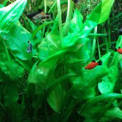 Aquarium fish, plants, feed home breeding