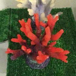 Νέα κοράλλια άλγης σιλικόνης για το ενυδρείο