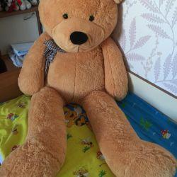 New bear