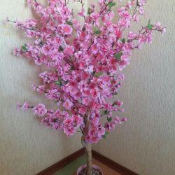 Sakura ağacı