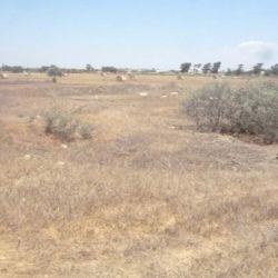 Two Fields in Liopetri, Famagusta