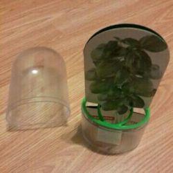 Контейнер для сохранения зелени