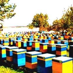 Φυσικό μέλι από το μελισσοκομείο