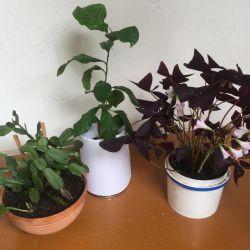 Εσωτερικά λουλούδια