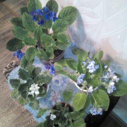 Flori pentru camere