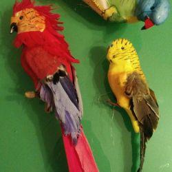 Ev ve bahçe dekoru için papağanlar