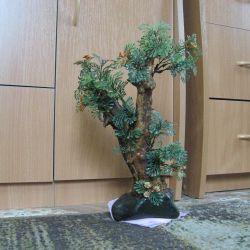 Δέντρο μπονσάι