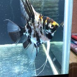 Aquarium fish, plants, feed