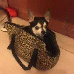 Carrying bag / dog bag