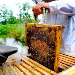 Natural honey wholesale
