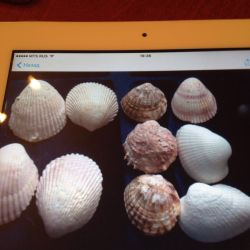 Shells for aquarium