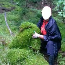 Building moss