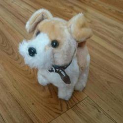 Toy Dog