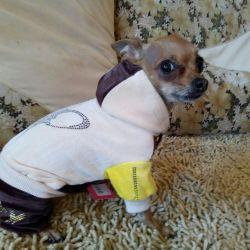 Велюровый костюмчик для собаки